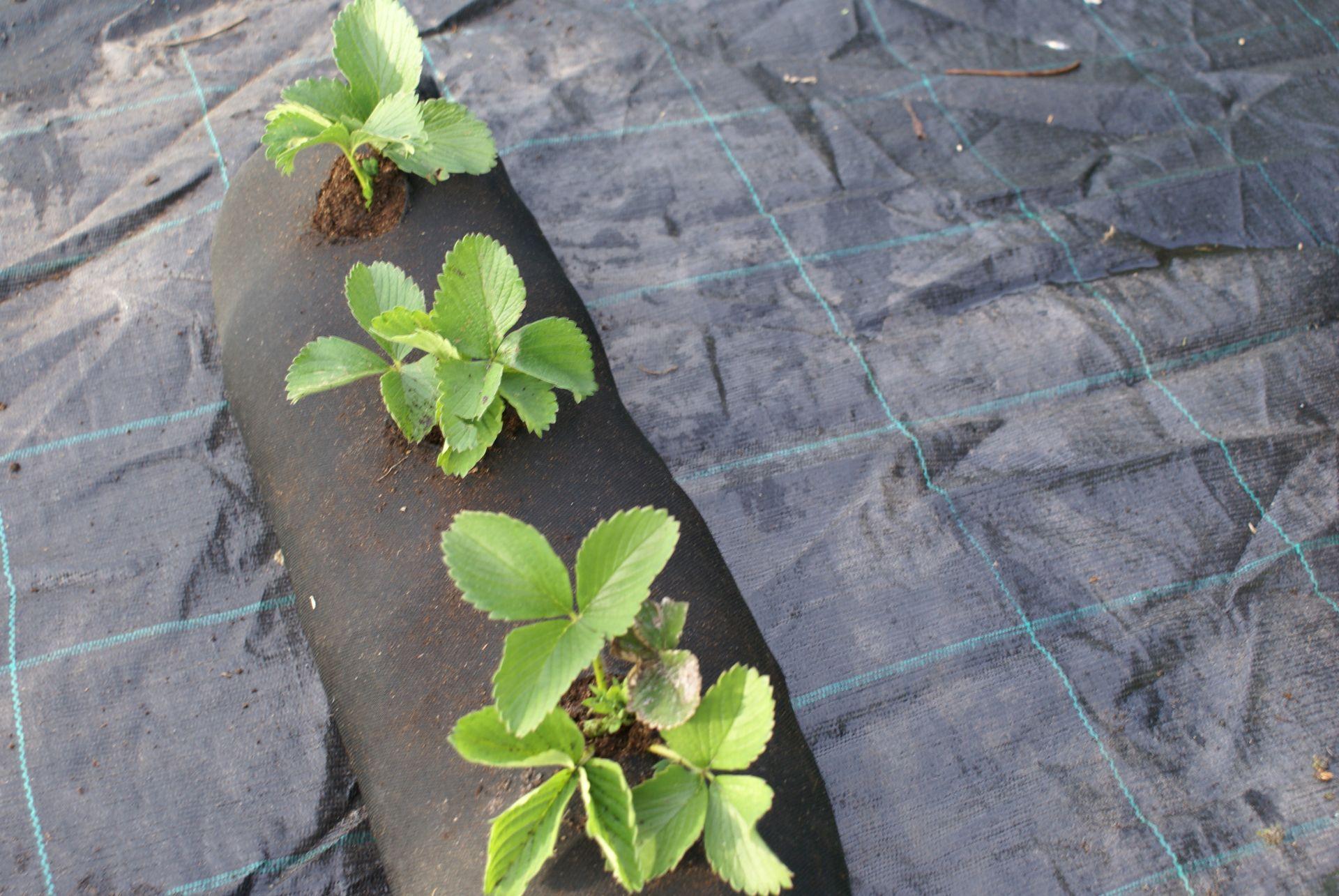 4m plantation geotextile weed tissu jardin for Plantation jardin